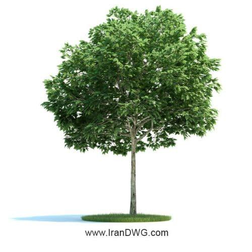 آبجکت تری دیمکس درخت شماره 1 به همراه تکسچر برگ درخت و چوب درخت