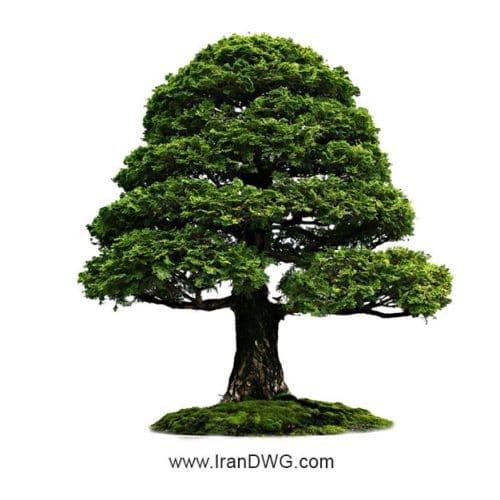 مجموعه تصاویر باکیفیت درخت شماره 1 در حالت های متنوع ( 25 ) مناسب برای پست پروداکشن